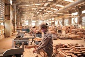 Bụi gỗ ảnh hưởng đến sức khỏe của người lao động