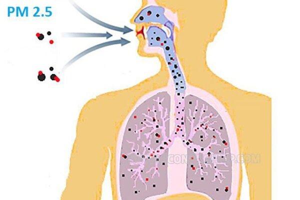 Bụi mịn PM2.5 là gì? Bụi mịn PM2 5 từ đâu? Thực trạng bụi mịn ở một số thành phố lớn
