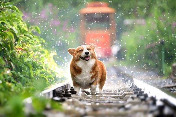 Những giống chó đẹp nhất thế giới bạn không nên bỏ qua