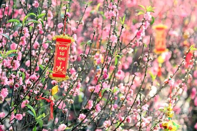 cách giữ hoa đào tươi lâu ngày tết