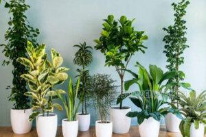 6 loại cây cảnh mang tài lộc vào nhà giúp bạn giàu sang và may mắn