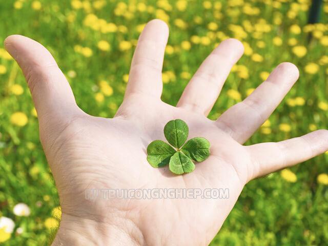 Cỏ 4 lá - vật may mắn khi đi thi phổ biến nhất